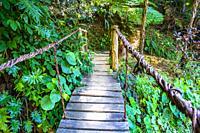 Wooden bridge in the tropical nature of Topes de Collantes, Trinidad, Republic of Cuba, Caribbean, Central America.