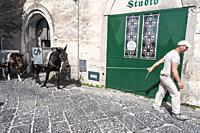 A construction worker pulls two mules behind him on a street in Scala, the Amalfi Coast. In spite of cranes, trucks, and other modern equipment, mules...