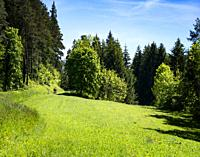Cyclists riding through a forest in springtime, Black Forest Region, Baden Württemberg, Germany