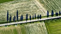Road through agricultural fields in springtime from above with tree shadows, Baden Württemberg, Germany