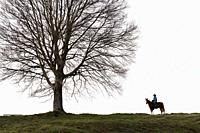 Veteran cowboy on his arabian horse in front of a lonely tree.