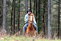 A veteran cowboy riding his arabian horse in the forest.