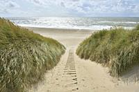 Dune landscape with sandy footpath to the sea in summer, Argab, Hvide Sande, Ringkobing Fjord, North Sea, Midtjylland, Central Jutland, Denmark.