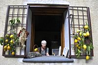 A visitor peeks out of the window of a small cafe in the countryside near Scala, the Amalfi Coast, Italy. Fresh lemons and drying herbs, all locally p...