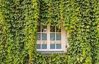 window and greened facade, dutch quarter, potsdam, brandenburg, germany.