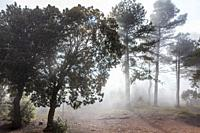 Foggy Forest in the Natural Park of Montserrat mountain, Barcelona, Spain.