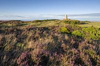 The trig point at Wills Neck surrounded by heather in the Quantock Hills Area of Outstanding Natural Beauty, Somerset, England.
