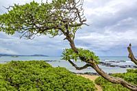 Rugged coasdtline om Oahu Island.