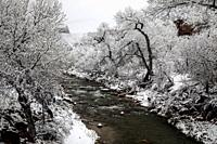 Fresh snow has fallen along the Virgin River at Zion National Park, Utah.