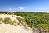 National Park of Doñana, Huelva, Spain.