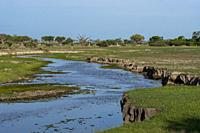 View of a small river in the Gomoti Plains area, a community run concession, on the edge of the Gomoti river system southeast of the Okavango Delta, B...