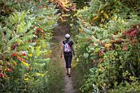 Woman hiking on Bruce trail in Forks of the Credit conservation area in Ontario.