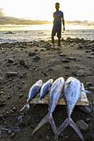 Tuna and Wahoo freshly caught at Tarrafal de Monte Trigo Village, Porto Novo Municipality, Santo Antao, Cape Verde Islands, Africa.