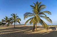 Kokospalmen am Strand von Cape Point, Bakau, Gambia, Westafrika   palm fringed Cape Point beach, Bakau, Gambia, West Africa, .