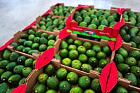 Boxes of avocados are seen aligned on the pallet at a processing plant in Sonsón, Antioquia department, Colombia, 22 October 2019. Over the past decad...