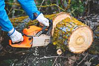 Close up of a lumberjack cutting old wood with a chainsaw .