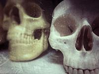 plastic human skulls, used to teach medical students.