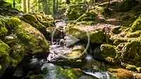 flowing water of a waterfall in the Black Forest as time lapse of longtime exposures, Germany, particularly calm flow with smooth water motion at the ...