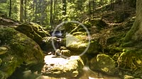 flowing water of a waterfall in the Black Forest as time lapse, Germany, moving shadows and sunlight through the forest and sparkling waterfall while ...