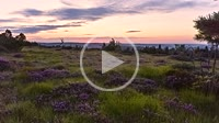 Sunrise above heather landscape in the Black Forest as time lapse, Germany, special flora on mountain Schliffkopf in the nature reserve, Calluna vulga...