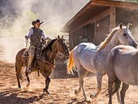 A cowgirl or wrangler drives a herd of horses out of the corral at the Red Cliffs Ranch near Moab, Utah.