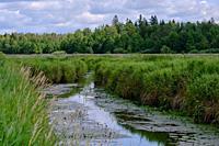 Lutovnia River in summer nearby Bialowieza village, Podlasie Region, Poland, Europe.