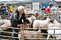 Farmer catching sheep in oen at North Harris Agricultural Show, Tarbert, Isle of Harris, Outer Hebrides, Scotland