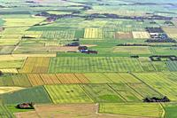 Aerial view over farmland showing tractor tracks in agricultural parcels / plots of land with cereal crops and wheat fields / cornfields in summer