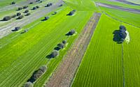 Drone view landscape of cereal fields and holm oaks, Community of Madrid, Spain, Europe.