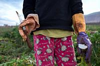 A 10 year old labourer coming from Syria picking radishes holds a knife at a lebanese farm in Bekaa Valley, Lebanon. . Syrian refugees, women and girl...