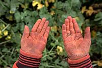 Empty hands of 8 year old syrian refugee girl working at a lebanese farm in Bekaa Valley, Lebanon. Syrian refugees, women and girls, fleeing from war,...