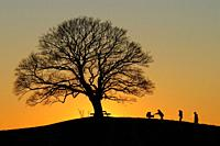 A family going up a hill with a single tree in sunset in Skurup, Scania, Sweden.