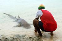 man feeds pet shark, every day, Fakarava, Tuamotus, French Polynesia.
