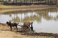 Water supply, country between Nyaung U and Popa Mountain, Mandalay region, Myanmar, Asia.