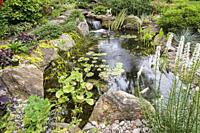 Nymphaea - Waterlily pads, Acorus calamus 'Variegatus in rock edged pond with waterfall, wooden footbridge bordered by Lysimachia nummularia 'Golden ...