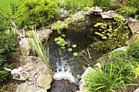 Nymphaea - Waterlily pads, Acorus calamus 'Variegatus, Sagittaria latifolia 'Duck potato' - Arrowhead in rock edged pond with waterfall bordered by He...
