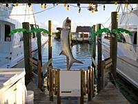 Fishing Yatches Marina. Islamorada. Florida. USA.
