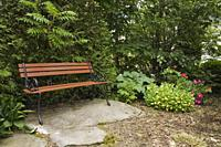 Brown wooden bench on top of large stone backed by a Thuja occidentalis - Cedar tree hedge, Acer - Maple tree and flanked by Hosta plants in backyard ...