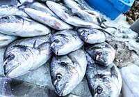 Freshly caught fish at the fish market in Cadiz, Andalucia, Spain.