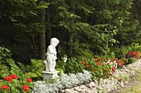 White concrete Renaissance sculpture of young man playing a violin and red Geranium 'Maverick Scarlet' flowers and Senecio cineraria - Silver Dust pla...