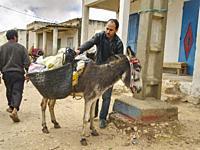 man loading saddle bags on his donkey at the market in Ida Ougourd Market, near Essaouira, Morocco.