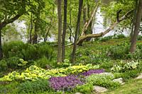 Garden border with white Asperula odorata - Woodruff flowers, purple Lamium, - Deadnettle and Hosta plants in sloped backyard garden in spring.