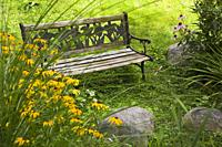 Old wooden and brown cast iron metal sitting bench bordered by yellow Rudbeckia and Echinacea purpurea - Coneflowers flowers in backyard garden in sum...