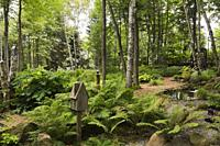 Woodland with birdhouses on tree stumps and Pteridophyta - Ferns in backyard garden in summer.