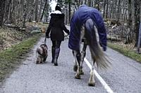 Stockholm, Sweden MArch 17, 2020 A woman walks her horse and dog in a local forest.
