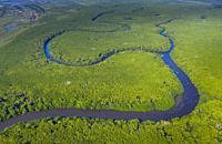 Mangrove, La Tovara National Park, Ramsar Site, Wetlands of International Importance, San Blas Town, Matanchen Bay, Pacific Ocean, Riviera Nayarit, Na...