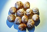 Snail Shells.