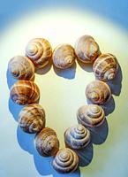 Snail Shells forming a Heart Shape.