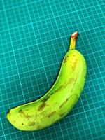 One green banana