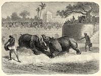 Rhinoceros Fight at Vadodara (Baroda). Gujarat, India. Old engraving illustration from El Mundo en la Mano 1878.